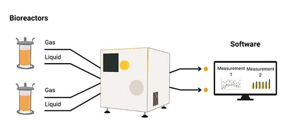 Gleichzeitige Messungen aus zwei verschiedenen Bioreaktoren, die im Vario one gemessen und mithilfe der Software ausgemessen werden